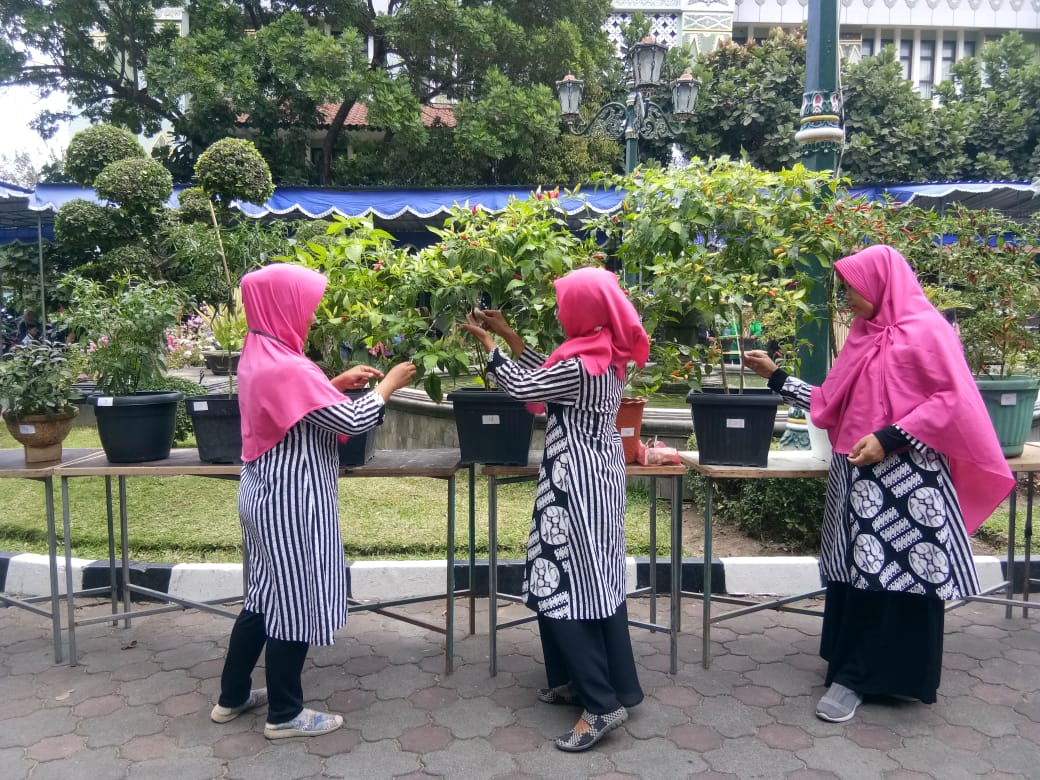 Juara 3 dan Juara Harapan 1 Lomba Pohon Cabai Tingkat Kota Yogyakarta